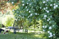 Rosengarten, Alba Nivea