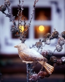 winterdeko