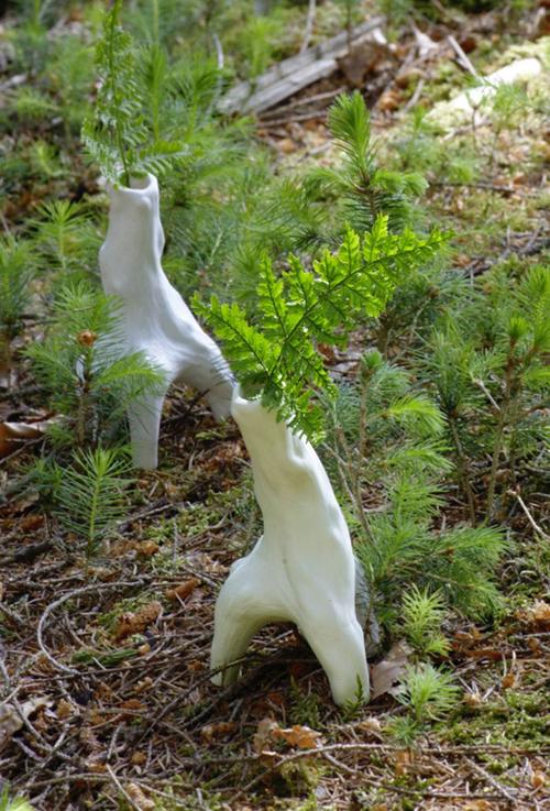Vasen im Waldboden